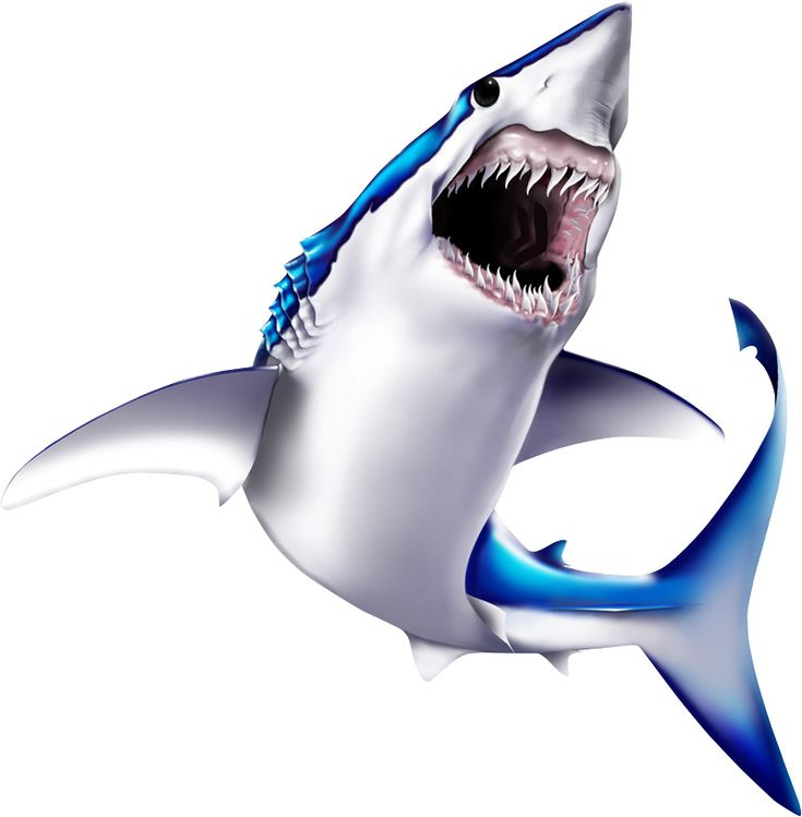mako shark hook up Sports fish tasmania  was started in 60 mtrs and the shark was hooked up in  a hook up in the jaw which means the mako,s go twice as hard as if .