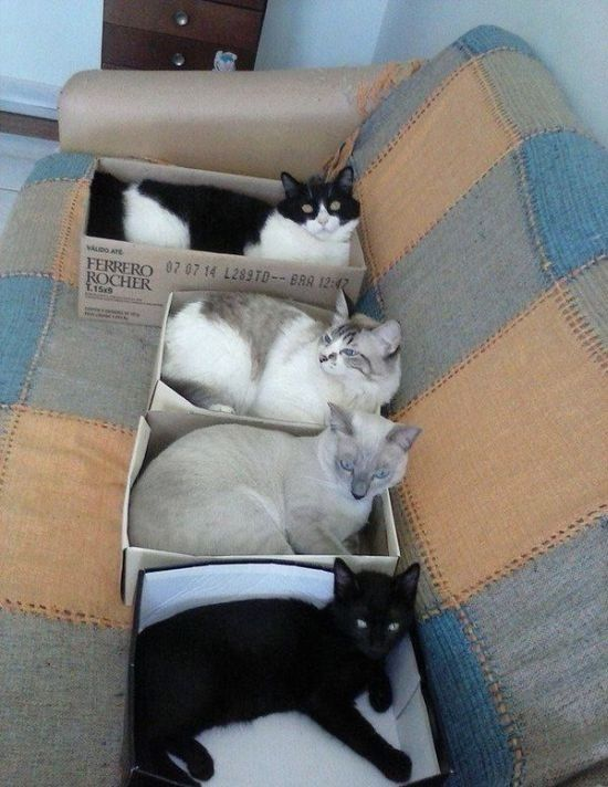 How Do You Like My Furry New Shoes? - Shoe Box Cat Beds