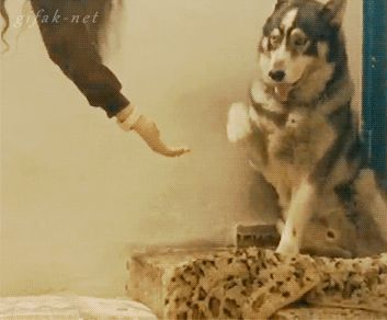 """""""Oh… that's cool, cat. Sure. Just steal my handshaking thunder."""" 