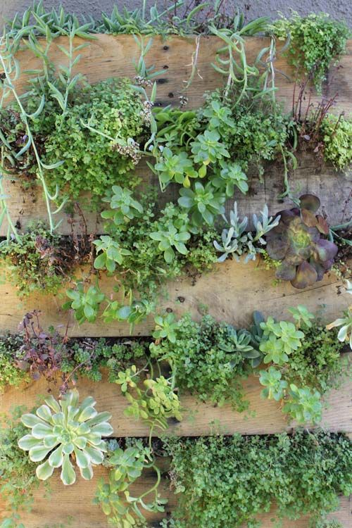I love these pallet gardens!  I can't wait to get mine planted.