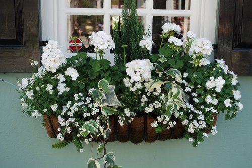 Green + white windowbox. #windowboxes www.boatswainco.com