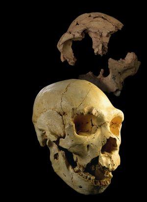 Nutriguía: Todo comenzó en... Atapuerca