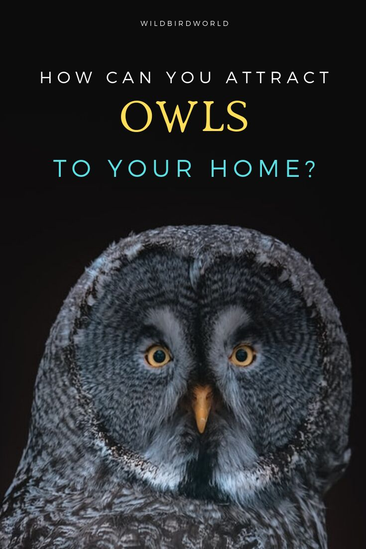 How to attract Owls to your yard? in 2020   Owl, Attract ...