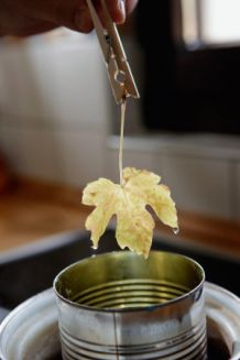 using wax for conservation Landlust - Blätter konservieren