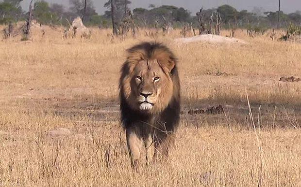 Cecil the Lion bites back