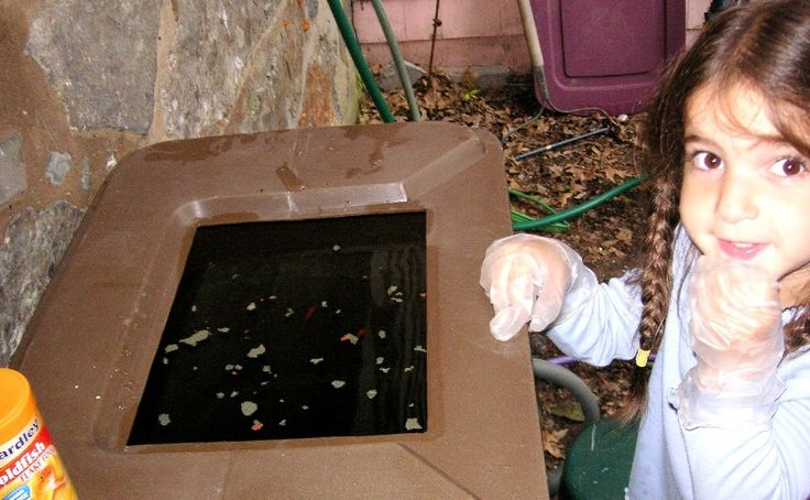 Keeping Fish in a Rain Barrel to Prevent Mosquito Larvae
