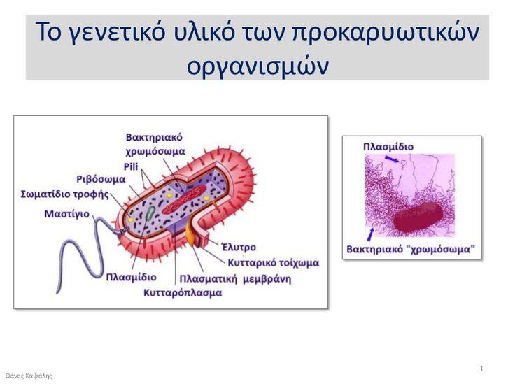 Γενετικό υλικό προκαρυωτικών οργανισμών