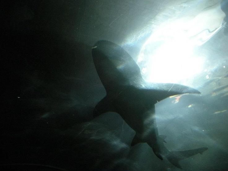 tiburon acuario sydney australia