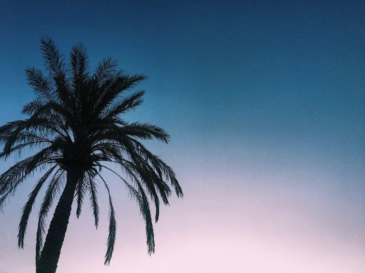 Palms 🌴
