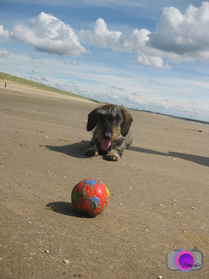 my sweet dog on the beach! with my new logo.