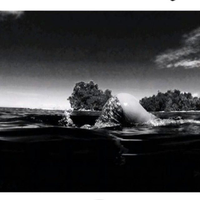 Bon Lundi [ @hinateaboo in the water with our Wetcheeky high waisted bottom ]  #bestquality  #quality #limestoneneoprene #yamamotoneoprene #mermaid #cetusmermaid #cetus #cetusbiarritz #costumemouillé #wet #surf #surfer#surfgirl #mentawai #scale