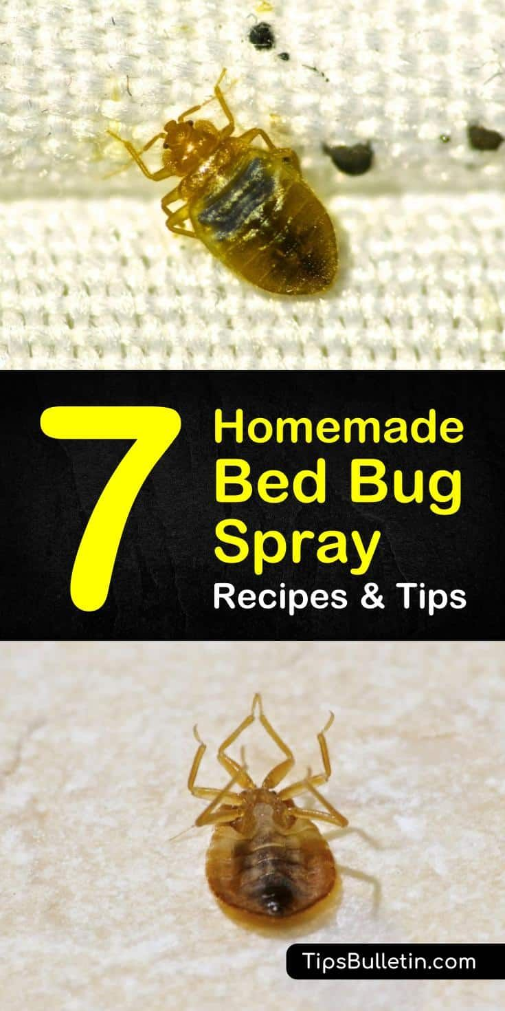 Getting Rid Of Bed Bugs 7 Homemade Bed Bug Spray Recipes And Tips