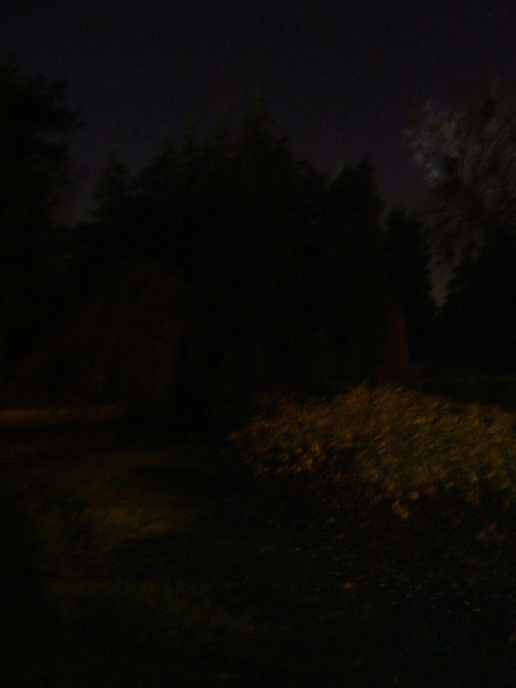Ruth Larkin vitruvian man project, night gardens