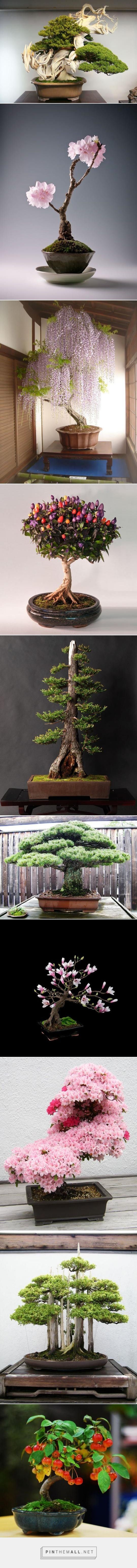 The Most Beautiful Bonsai Trees Ever.