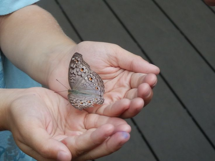Changi Airport in Singapore is great for keeping kids entertained when waiting for your flight, it even has a butterfly enclosure.