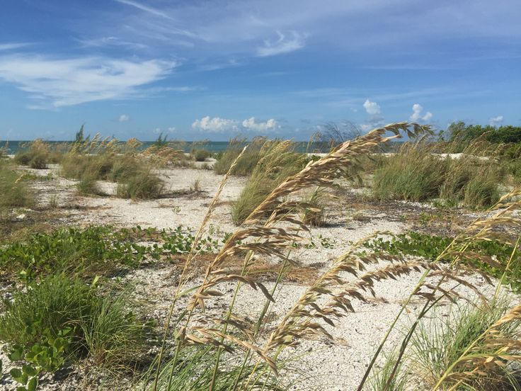 17 best images about new smyrna beach fl on pinterest for New smyrna beach fishing spots
