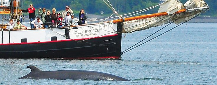 Jolly Breeze of St. Andrews - St. Andrews, New Brunswick Canada - This would be a dream experience. Sailing on a tall ship looking for marine life, while the kids can have fun dressing up as pirates!