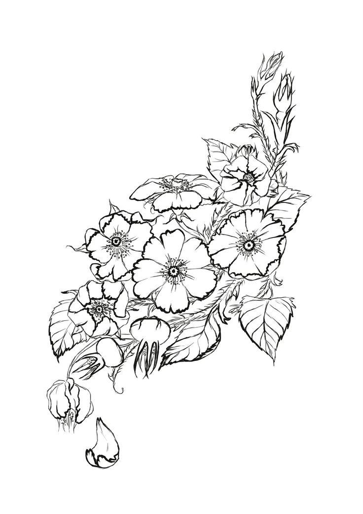 pass Rose additionally 8580062k135c8c7b furthermore 298 Tatouage Ephemere Fleur De Pissenlit Noire also Pochoir Tatouage Temporaire Unik Tattoo Coq Horoscope Chinois fr 4 COQ as well Vintage Floral Design 446736. on rose tattoos