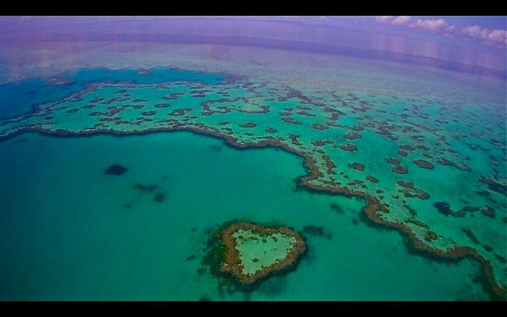 Büyük Bariyer Resifi - Avustralya