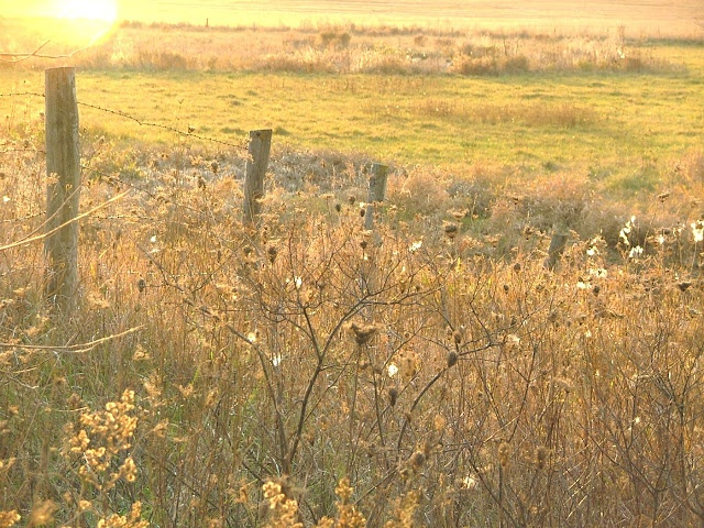 prairie: Farms Girls, Favorite Places, Country Girls, Pretty Places, Golden Lights, Prairie Girls, Golden Palettes
