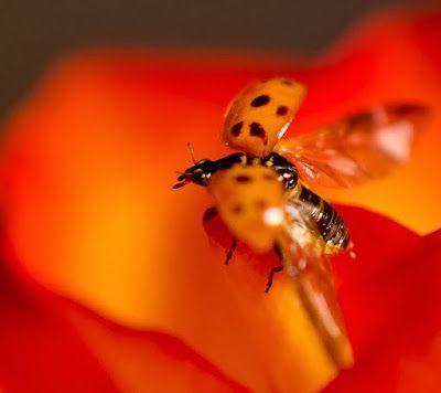 Leven: Van oranje rozen en lieveheersbeestjes