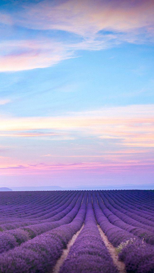 Der Himmel Lila Lavendel H5 Hintergrund Landschaftsfotos Bilder Hintergrund Landschaft