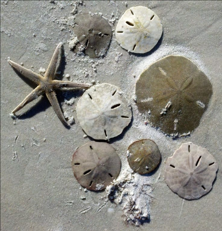 Sand-dollars know your sandollars.  The darker they are the more alive they are.  Do not keep them!  White is right.  ONLY>