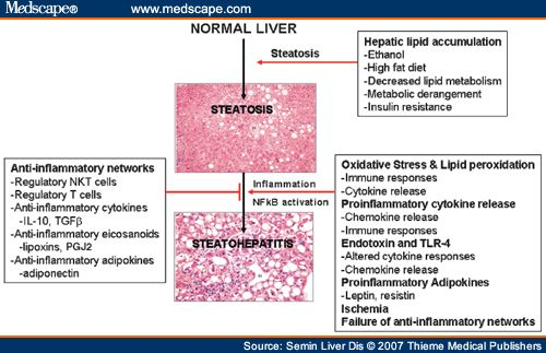 The development of steatohepatitis. Initial insults related to changes in lipid metabolism or the effects of ethanol cause steatosis