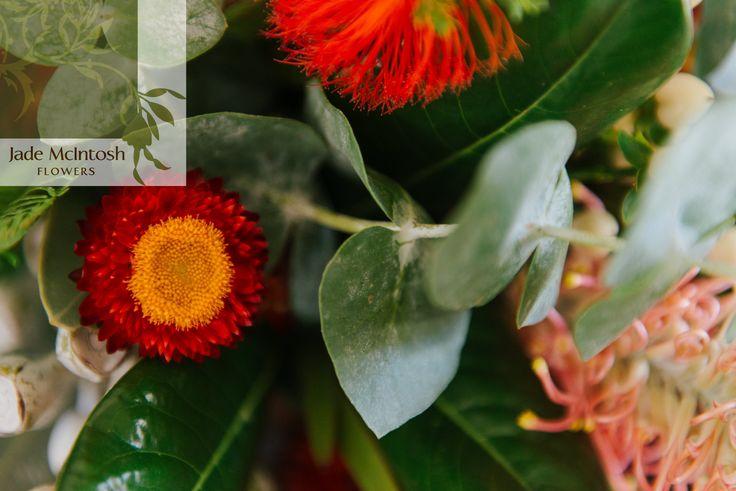 There's a reason we love natives. www.jademcintoshflowers.com.au euphoriafilms.com.au