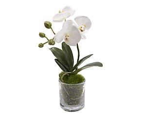 Composizione di Orchidea Phalae artificiale con vaso - h 28 cm