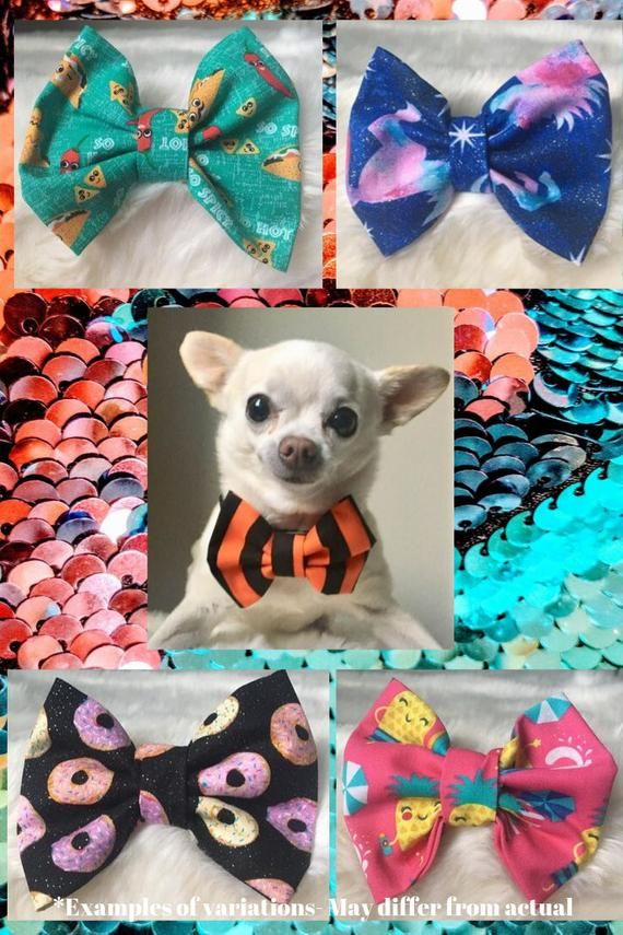 Pet Bow Tie Subscription Box Dog Bow Tie Of The Month Club Cat