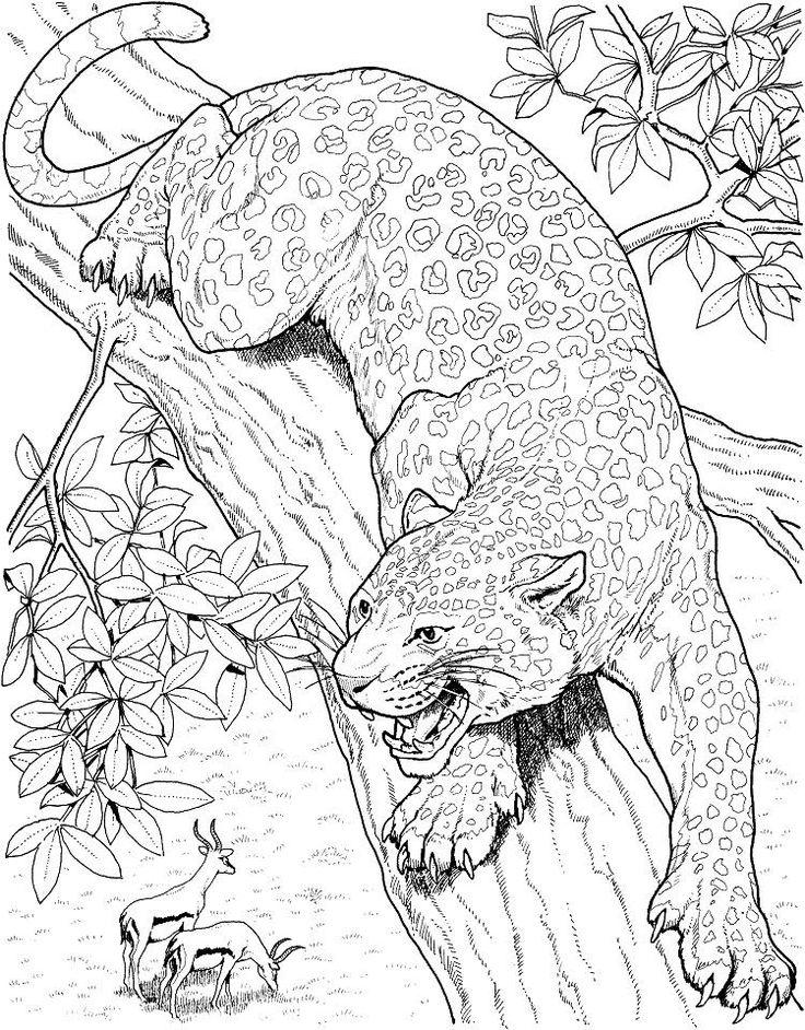 realistic big cat coloring pages  ausmalen ausmalbilder