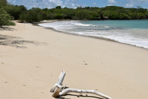 Anse des Salines - Sainte-Anne - Martinique