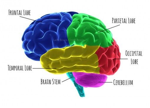 The 25 best human brain diagram ideas on pinterest diagram of human brain parts highlighted with clipping path ccuart Image collections