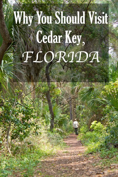 Cedar Key is one of the best places to go kayaking with dolphins in Florida and watch Florida wildlife. Here is what to do & where to stay in Cedar Key.