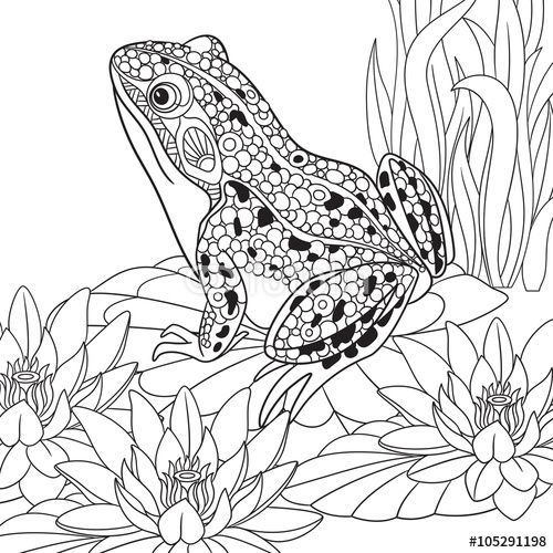Zentangle frog sitting among lotus flowers, water-lilies coloring page