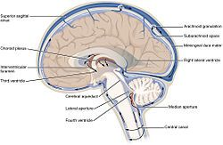 Cerebrospinal fluid - Wikipedia, the free encyclopedia