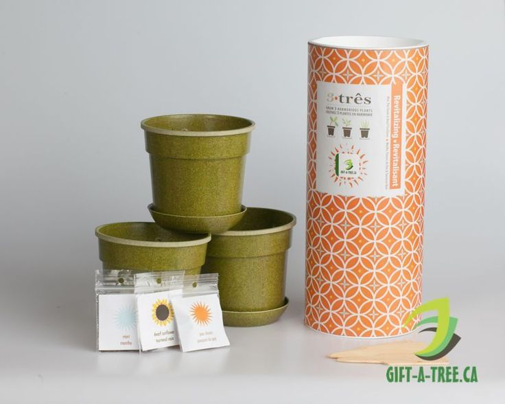 Tre-Revitalizing. Includes Mint, Pea Shoots, and Dwarf sunflower. Find at: http://www.gift-a-tree.ca/apps/webstore/products/show/3744923