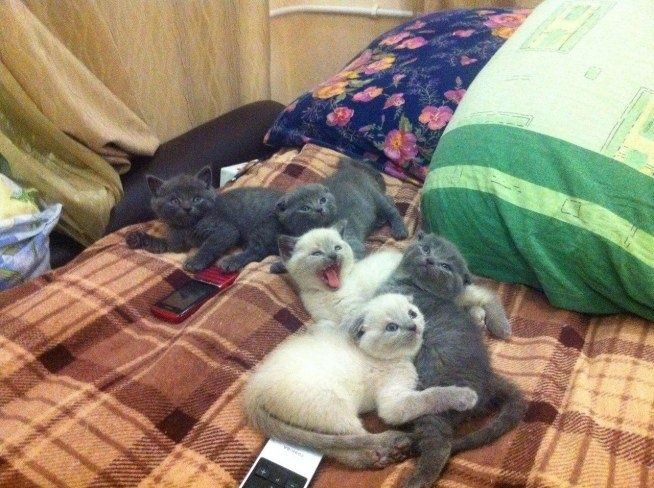 many cats in one place :) #animals #kitty #cats #pets