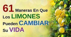 Los limones son ricos en vitamina C y otros antioxidantes, también son buenos para cocina, cuidado de la piel, primero auxilios, desodorizar, limpiar y más. http://articulos.mercola.com/sitios/articulos/archivo/2015/05/16/usos-del-limon.aspx