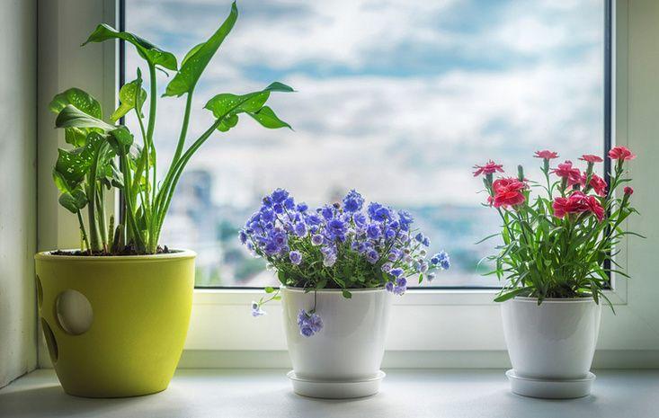 Цветы для семейного счастья по фен шуй
