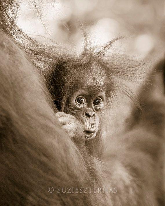 Baby dieren fotografie BABY orang-OETAN Sepia door BabyAnimalPrints