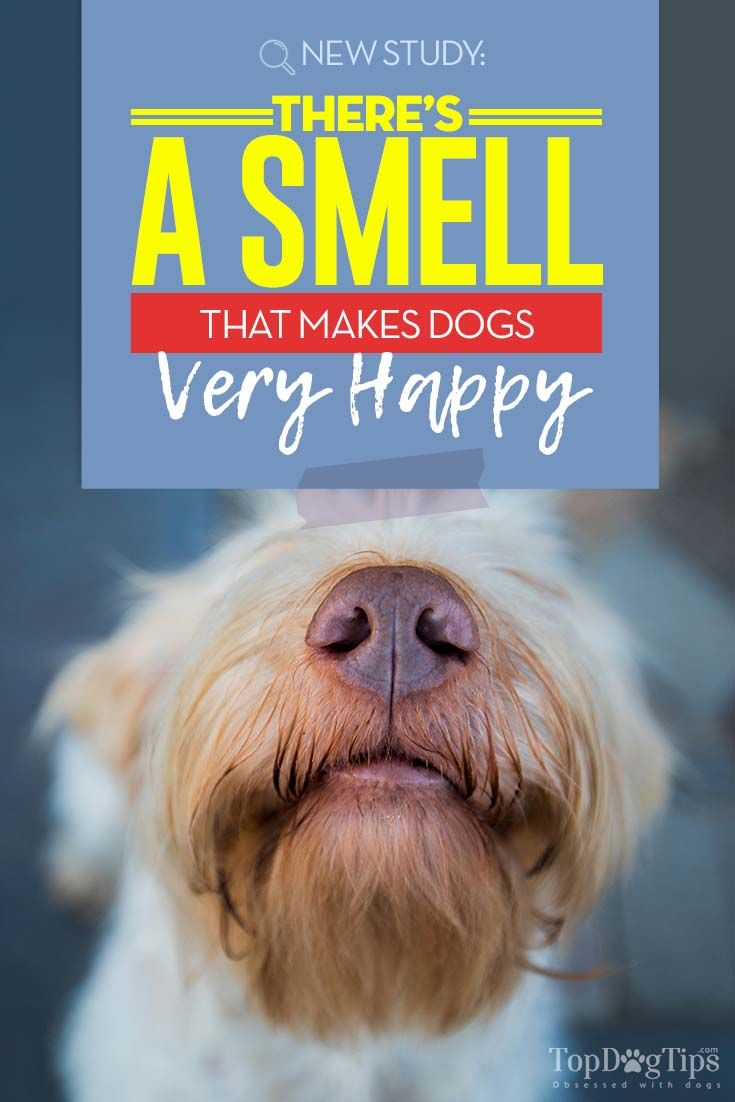 Research Shows Dogs Have Their Favorite Scent It S The Owner S