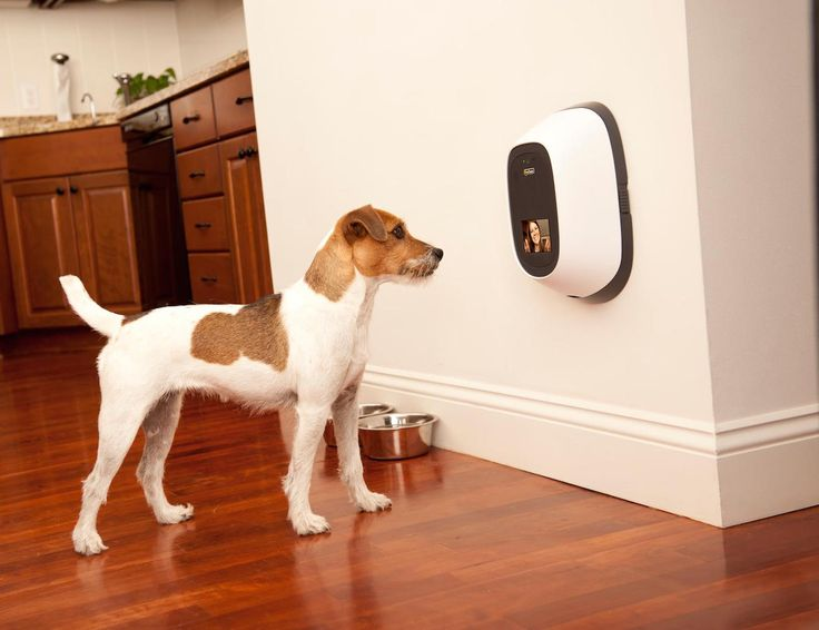 All concerned pet parents can now stay connected to their pets even when they are outdoors with PetChatz.