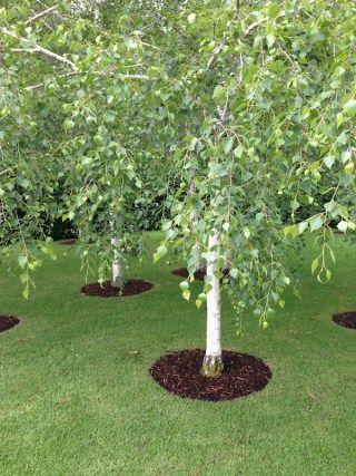 Garden DesignFest: 2 Robert Boyle gardens - GardenDrum