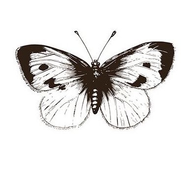 – Schmetterling