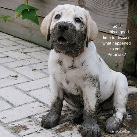 Best Dog Humor Images On Pinterest Funny Dogs Animal - 28 times letting your dog play in the mud wasnt a good idea