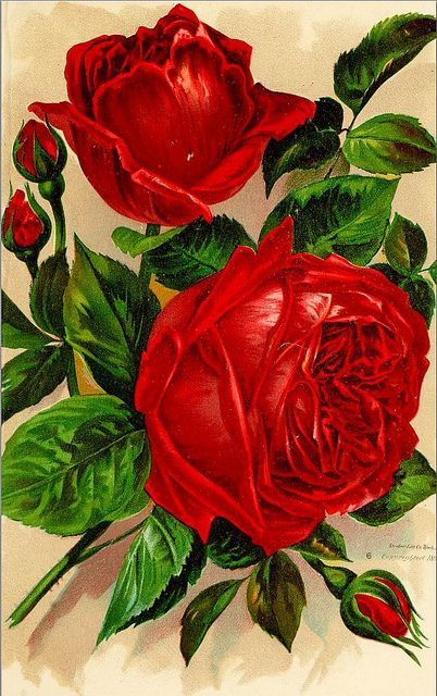 Rose Plate 4 1892 | Flickr - Photo Sharing!