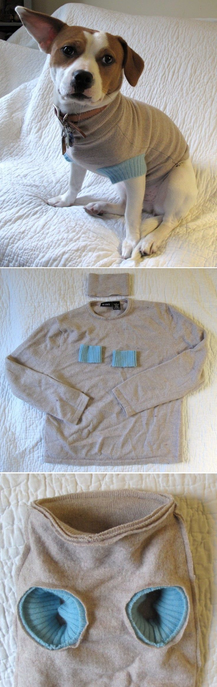 DIY this dog sweater using your old one! Waste not, want not – and Fido gets some new duds.