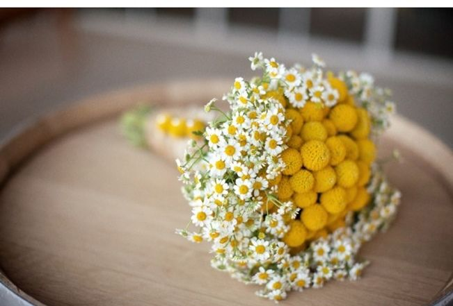 Wedding Flower Inspiration: Craspedia